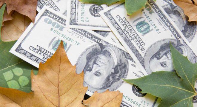 Money in pile of leaves